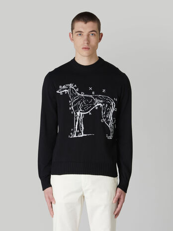 Regular-fit cotton crew-neck pullover with embroidery